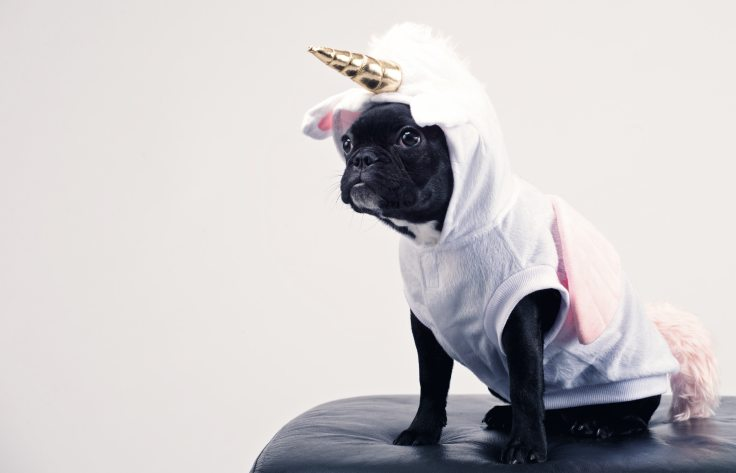 boston-terrier-wearing-unicorn-pet-costume-1564506